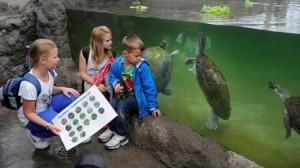 Het nieuwe vlinderparadijs in Diergaarde Blijdorp is nu compleet. Behalve zo'n duizend bontgekleurde vlinders zijn er nu ook diverse andere diersoorten gehuisvest. Hier bewonderen drie jonge bezoekers de zeldzame Arrau-schildpadden onder water. In dierentuinen zijn deze grote zoetwaterschildpadden zelden te zien en in het wild is hun aantal flink geslonken. De schildpadden leven in Blijdorp o.a. samen met zoetwaterroggen.foto Rob Doolaard