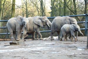 olifanten Wuppertal