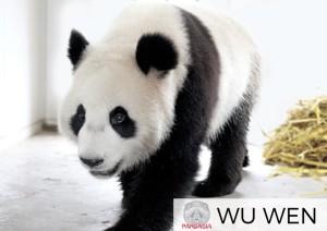 foto Wu Wen