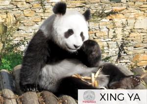 foto Xing YA