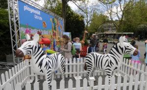 Rotterdam Diergaarde Blijdorp 7 mei 2015 Playmobil 4-daagse in Diergaarde Blijdorp van 7 t/m 10 mei met het thema de Zoo. Kinderen kunnen hun eigen dierentuin creëren met dieren uit de hele wereld. Nieuw in deze rijke dierenwereld is de okapi. Heel toepasselijk nu in Blijdorp weer okapi's zijn te bewonderen in het gloednieuwe Afrikaanse regenwoud. Een aantal extra grote figuren uit de speelgoed-dierentuin is te vinden op het voorplein bij de Rivièrahal. Lego in Blijdorp NOVUM COPYRIGHT Rob Doolaard
