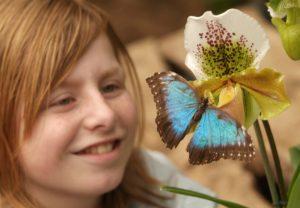 insekt ..vlinder..publiek..meisje..orchidee..flora vlinder vlinders