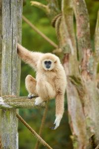 Foto: Safaripark Beekse Bergen