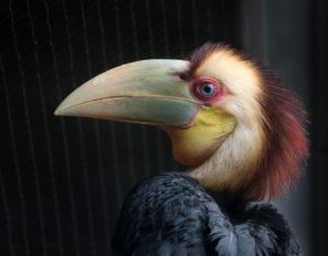 Jaarvogelkuiken is uitgevlogen. Foto ARTIS, Ronald van Weeren