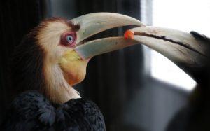 Jaarvogelkuiken wordt gevoerd. Foto ARTIS, Ronald van Weeren